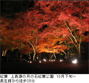 上長瀞月の石紅葉公園紅葉ライトアップ