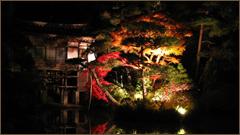 宝登山神社紅葉ライトアップ